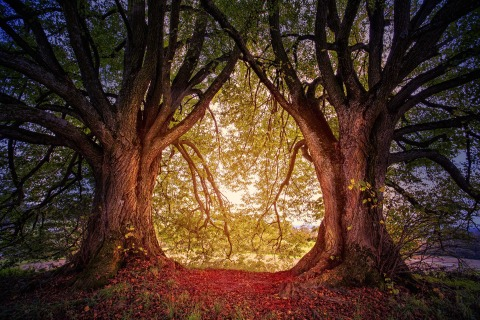 tree-3384831_1920.jpg